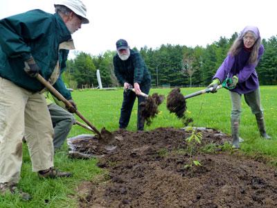 Planting a Chestnut Tree