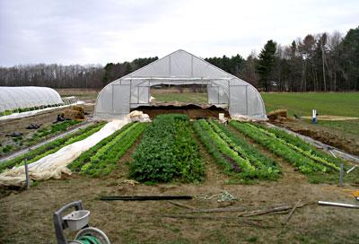 Peter Curra weighing vegetables