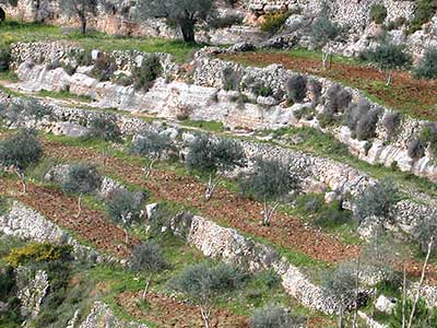 Terraces at Sataf in the Jerusalem Corridor. Photo courtesy of the Jewish National Fund.