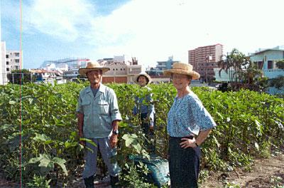 Seikyou farmers in okra field