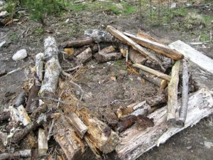 Raised beds were built for each tree using logs and brush left from clearing the land. Photo by Anneli Carter-Sundqvist