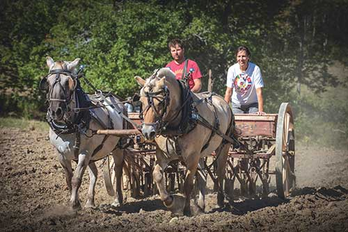 Genio driving Fjorgyn and Grane on a Cockshutt grain drill. David McCudden photo