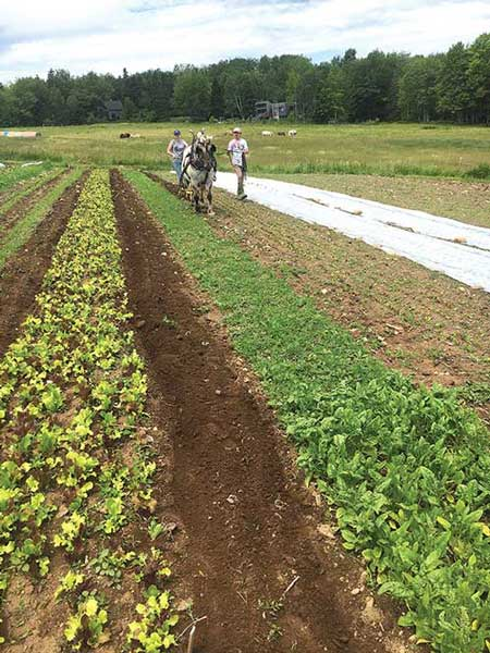 Apprentices learning to drive a walking cultivator. Mandala Farm photo