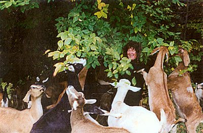 Tracy Walls with goats
