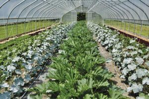 Cucumbers and zucchini head for summer harvests while spring greens grow in the outer rows.