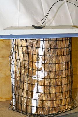 Fig. 3. A log nest.