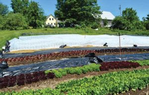 Outdoor production beds, tarped beds, winter squash covered with Reemay, and the farmhouse and barn