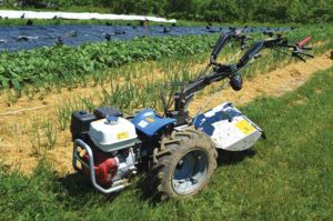 Gagne and Brautigam occasionally use a BCS walk-behind tractor in their plots.