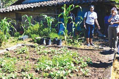 Kitchen garden in a Salvadoran dooryard