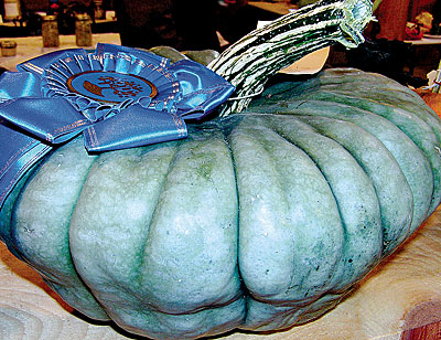 'Queensland Blue' squash