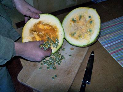 'Gleisdorfer' oilseed pumpkin