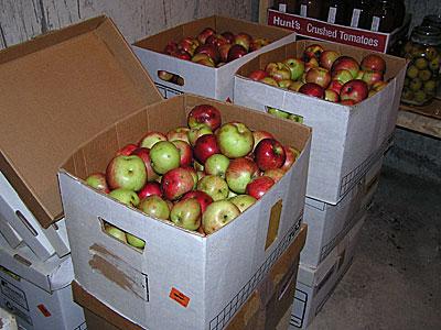 Apples filed safely