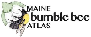 Logo of the Maine Bumble Bee Atlas