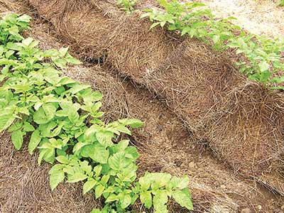 A heavy hay mulch, as promoted by Ruth Stout. Jean English photo