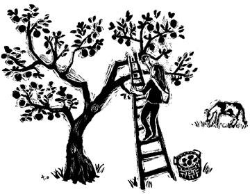 Apple Picker illustration by Toki Oshima
