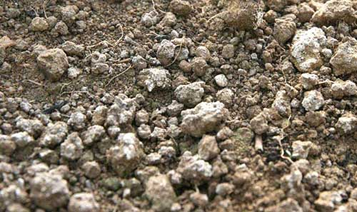 Excess mineral salts on greenhouse soil surface