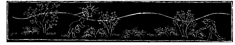 Lingonberry drawing by Toki Oshima