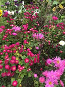Asters, Mixed by Matthew Dubois