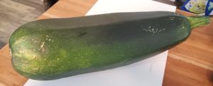 Biggest Zucchini 8 lbs 14 oz by Marsha and Michael Sloan