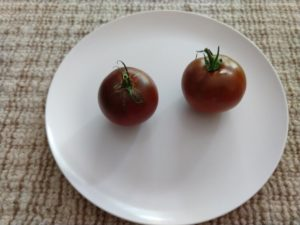Black Prince Tomato by David Frankel