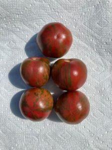 Black Vernissage Tomato by Hillary McAllister