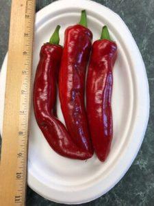 Boldog Paprika Pepper by Amy Frances LeBlanc