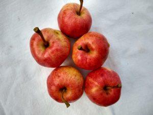 Braeburn apple by Anne Warner