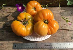 Goldie Tomato by Bria Sanborn