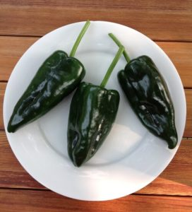 JUDGES' AWARD: Caballero Ancho/Poblano Hot Pepper by Martha Fenn King
