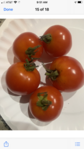 Campari Tomatoes from saved seed by Jo Eaton