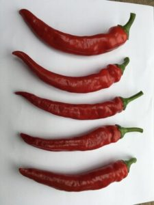 Cayenne Pepper - Red Ember by Rosey Guest