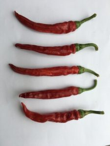 Cayenne Pepper - Red Rocket by Rosey Guest