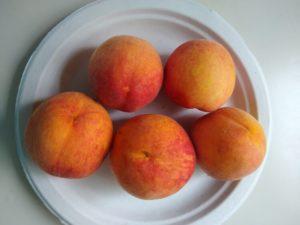 Contender peach by Anne Warner