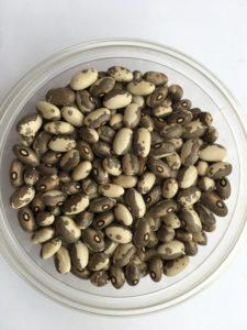 Dry bean - Dapple Grey by Friends of Sam Birch