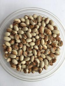 Dry bean - Dwarf Shield by Friends of Sam Birch