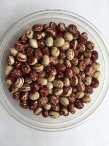 Dry bean - Good Mother Stollard - pole by Friends of Sam Birch