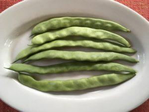 Early Riser bean by Martha Gottlieb