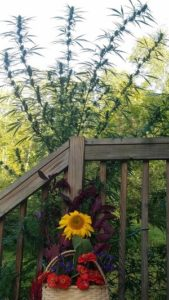 Sunflower Basket with Crown by Erica Hayward