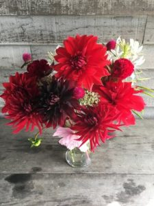 Flowers - annuals-Reds, mostly dahlias by Rosey Guest