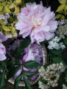 Fresh-picked Peony basket framed with viburnum and hydrangea by Erica Haywood