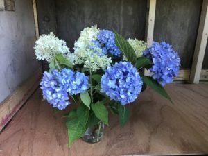 Hydrangea bouquet by Matthew Dubois