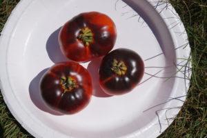 Indigo Apple Heirloom Tomato by Stephanie Oakes