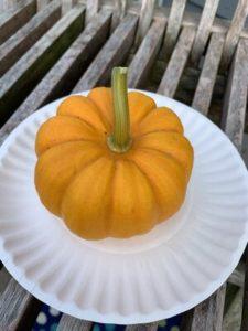 Jack Be Little Pumpkin by Darcy Johnston