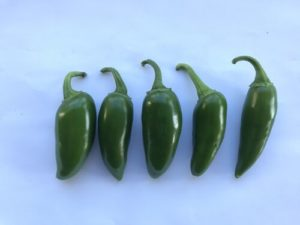 Jalapeno Peppers by Martin Woods Farm