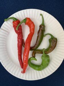 Korean Hot Peppers by Walker Elementary School