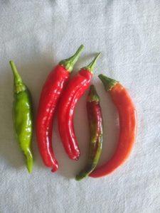 Korean hot pepper by Anne Warner