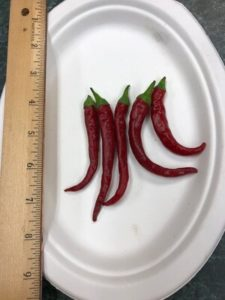 Long Red Cayenne Pepper by Amy Frances LeBlanc