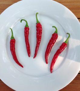 Long Red Narrow Cayenne Hot Pepper by Martha Fenn King