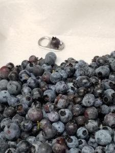 Maine wild blueberries by Valerie Jackson