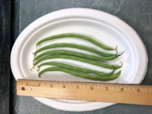 Maxibel Filet/Snap bean by Amy Frances LeBlanc